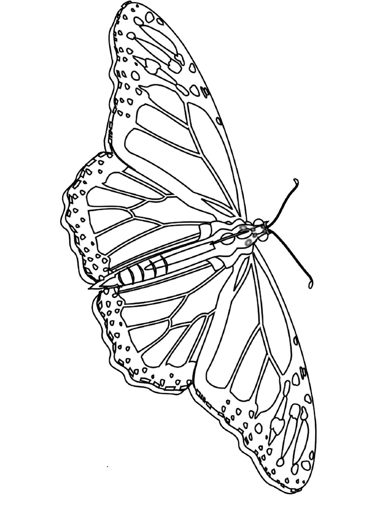 butterfly coloring page z31 coloring page - Advanced Coloring Pages Butterfly