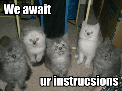 Funny Cat Captions Z31